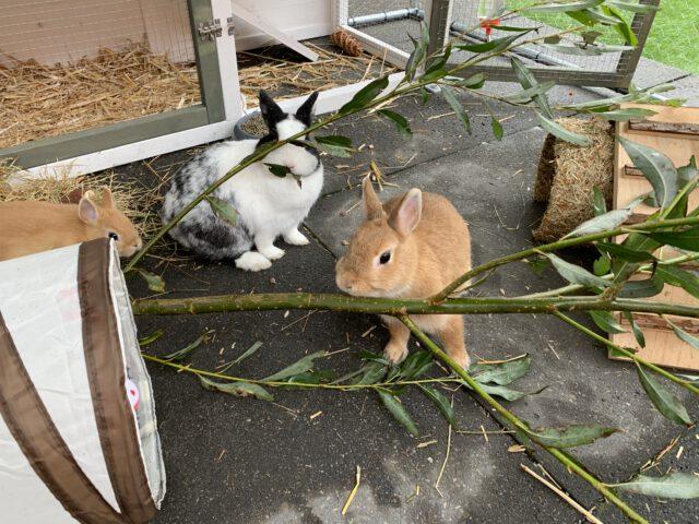 konijnen/dieren